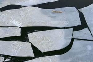 Flying over the Hudson Bay