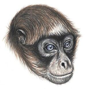 Hybrid spider monkey