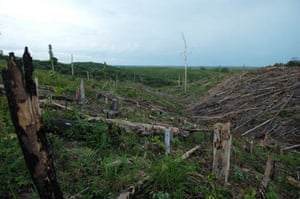 The Indonesian palm oil industry lays waste to tribal lands