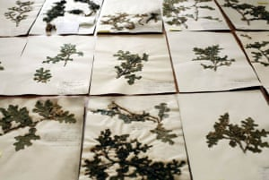 Herbarium at Kew Gardens