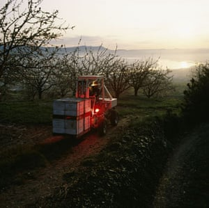 A bee farmer transporting hives