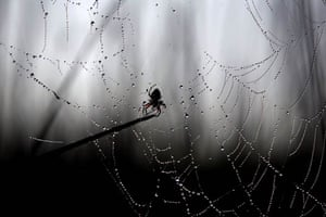 A spider sits on its web
