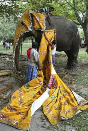 Colombo, Sri Lanka: Mahouts dress up an elephant for a Buddhist procession
