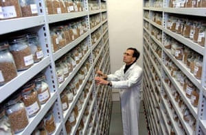 seed jars
