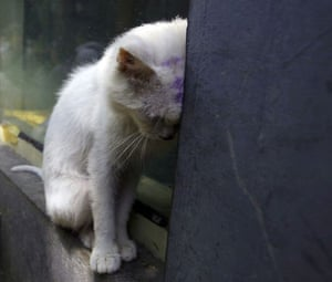 Beijing, China: A stray cat rests on a wall in the small hutong house of Ding Shiyang