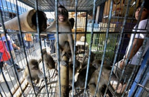Jakarta, Indonesia: A vendor waits for customers at his shop at an animal market
