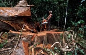 Logging in the Congo