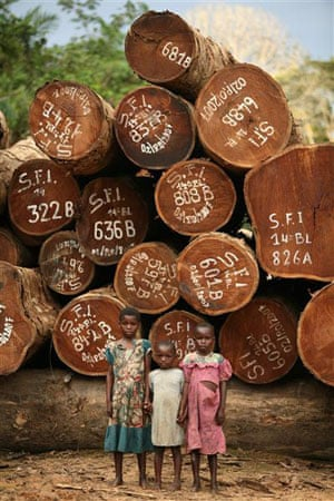 Children of a logger stand in front of Afrormosia logs in the SAFBOIS concession
