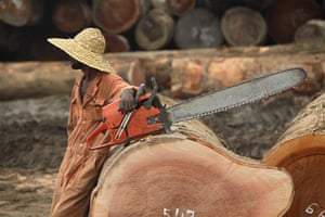 A worker with several large cut logs in a Sodefor log park