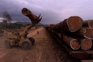 Logs of wood are loaded onto a train in Gabon