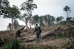 A Congolese park guard wanders through the wreckage of a recently destroyed section of Virunga National Park