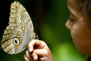 Valle del Cauca, Colombia: A girl holds an owl butterfly