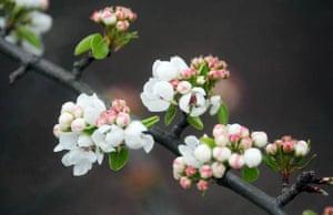 Surrey, UK: Blossom in Richmond park
