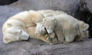 Moscow, Russia: Two polar bear cubs and their mother in Moscow zoo