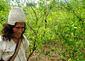 Environmental and social effects of the drugs trade in colombia