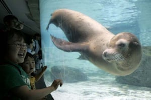 Seals swimming Oij Zoo