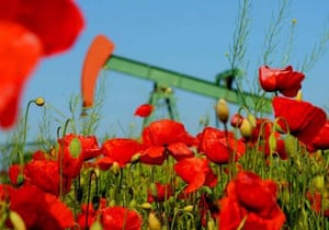 Poppies by oilrig