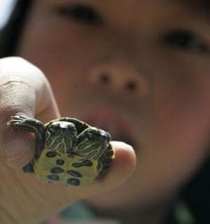 Double headed turtle