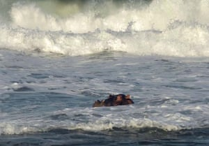 Hippo in Thompsons bay