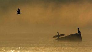 Bird at sunset Llanquihue lake