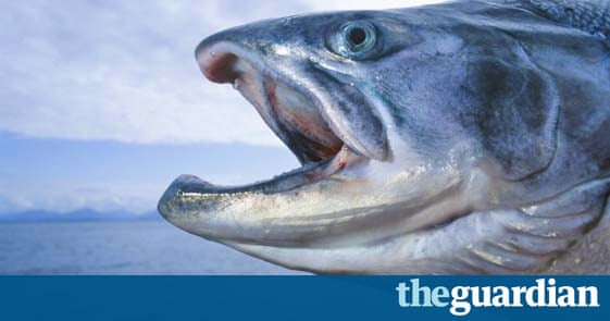 Fish to eat and fish to avoid environment the guardian for Fish to avoid