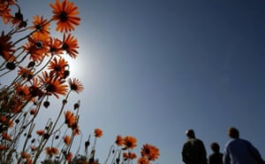 Clamwilliam, South Africa: Visitors walk past fields of seasonal wild flowers
