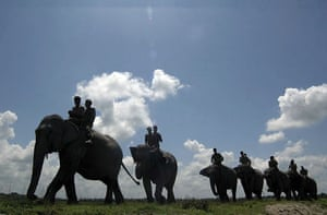 Kachubari, India: Forest officials on elephants search for signals from the radio collar attached to an endangered Indian one-horned rhinoceros
