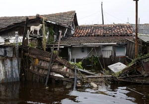 Pinar Del Rio, Havana: A dog stands on the roof of a house on a flooded streets