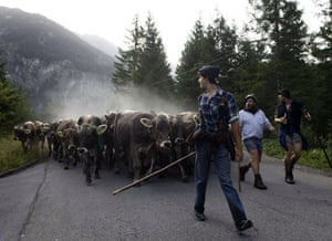 Bad Hindelang, Germany: Bavarian farmers, followed by their cows