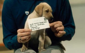 Blue Peter guide dog