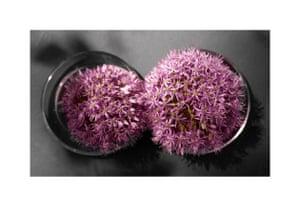 Two Alliums