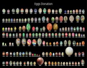 Donated Eggs