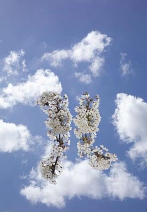Chromosomes Take To The Sky