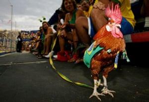 A cockerel wearing a Brazil football strip