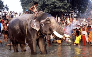An elephant in the Ganges at the Sonepur Mela