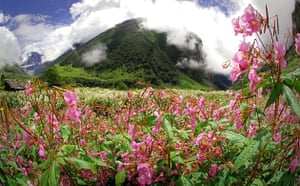 The valley of Flowers in the Himalayas, where the Ganges has its source