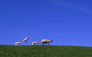 Spring Lamb, Netherlands.  Gerard Kingma, Netherlands.  Winner, Single Image 'Moment of Freedom' category, Travel Photographer of the Year 2005