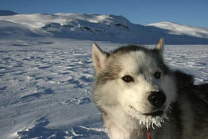 Husky with frosty whiskers