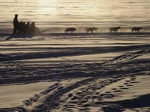 Husky dogs, Jukkasjärvi, northern Sweden
