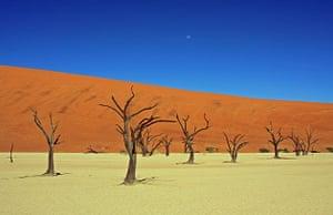 Dead Vlei near Sossusvlei in Namibia
