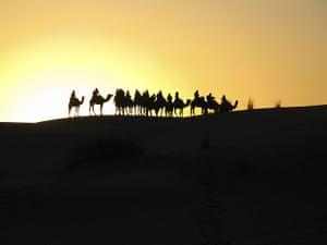 Sunrise by camel, Sahara desert