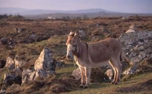 Roundstone Bog, Ireland