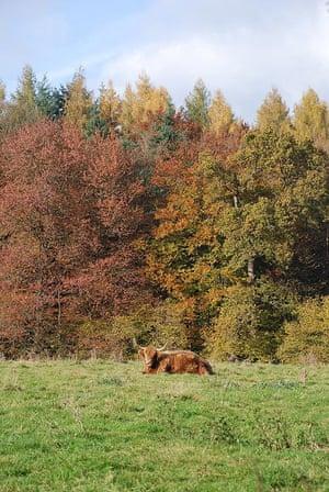 A cow in an autumn field
