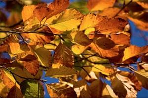 Leaves in Munich