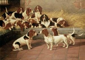 Bassett hounds old