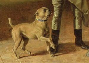 Bulldog old