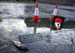 A carp lies dead on the side of the road after flooding hit Sheffield