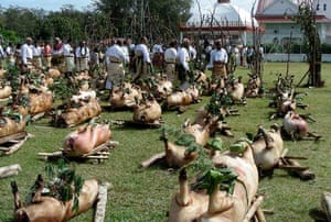 Cooked pigs for the ceremony