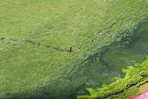 algae in qingdao