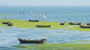 Qingdao city algae